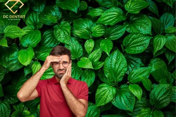 Cách chữa đau răng bằng lá trầu không hiệu quả cấp tốc